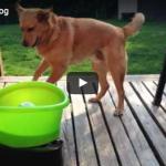 Ball-Wurfmaschine für Hunde