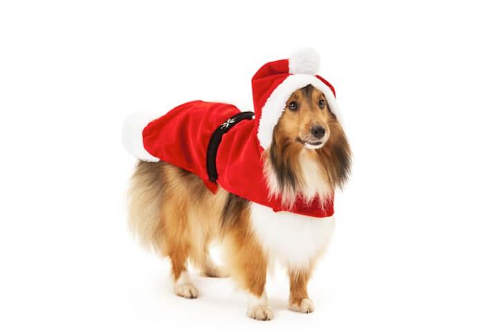 Hund im Weihnachtskostüm | © panthermedia.net / AarStudio