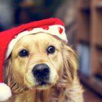 Weihnachtskostüme für Hund und Katze – Tierischer Spaß oder Tierquälerei?
