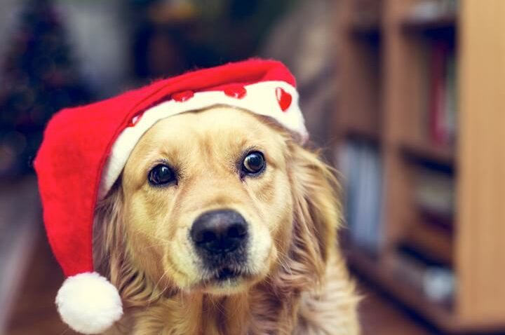 Hund mit Santa-Mütze | © panthermedia.net / tanjichica