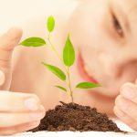 Das grüne Kinderzimmer – Welche Pflanzen ins Zimmer unserer Kinder dürfen